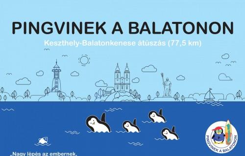 Pingvinek a Balatonon